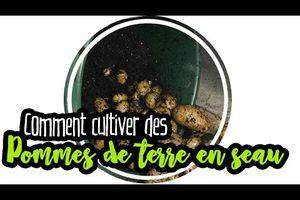 PERMACULTURE : Pommes de terre en seau