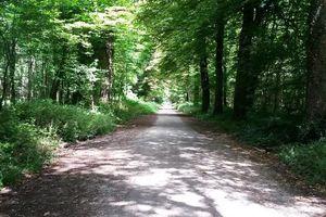Ouverture de la zone naturiste du bois de Vincennes