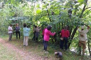 Journée découverte des plantes sauvages à St Brice en Cogles