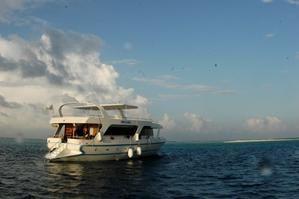 Plongées aux Maldives : le rêve devenu réalité