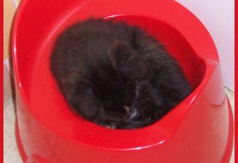 Macaron, le chaton #5