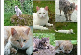 Florilège animalier... les chats se reposent... les petits chiens s'en vont