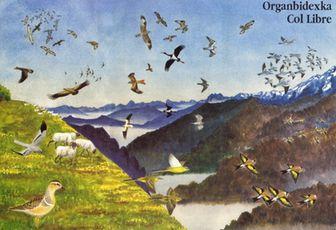 Suivi de la migration des pigeons à Urrugne (64), par Organbidexka Col Libre, à partir du 11 octobre 2012