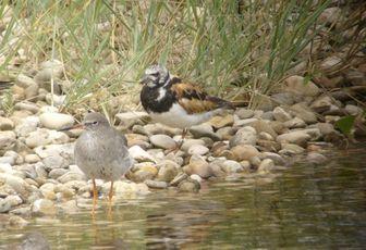 """Conférence sur """"La migration des oiseaux dans les Pyrénées-Atlantiques"""", Serres-Castet (64), mardi 02 octobre 2012"""