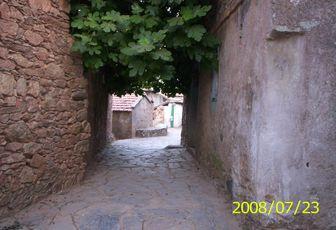 Kabylie (insolite) : Un figuier sans tronc !