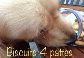 Biscuits pour 4 pattes....