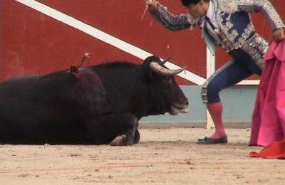 Exprimez-vous contre la corrida