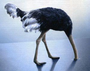 Sarkozy et son remaniement « Canada dry » Par Allain Jules