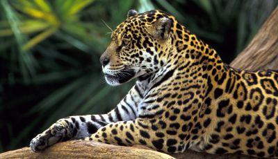Hilfeschrei aus dem Regenwald - wieder mal plant ein Ölkonzern eine Sauerei