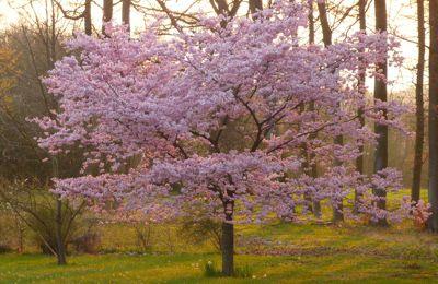 Un avant goût de printemps
