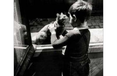 Charles Baudelaire - Le chat, extrait des Fleurs du mal