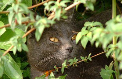 Bel-Gazou : chats et araignée de sa maison natale