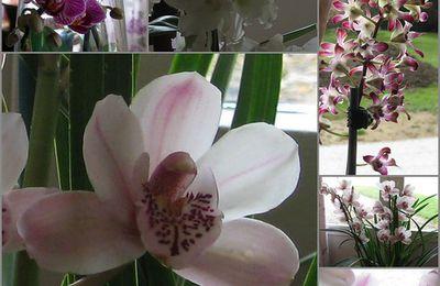 mes orchidées ...