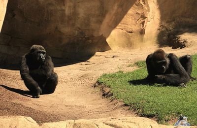 Zoo Hannover 19.07.2014