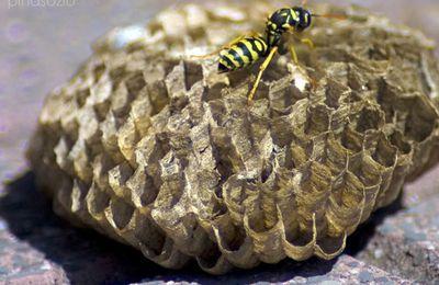 Ci ha punto un'ape: che fare?