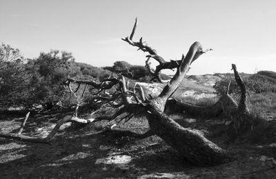 L'arbre et la tempête