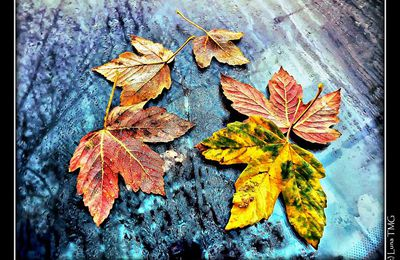 Feuilles d'Automne / Autumn Leaves (photographies)