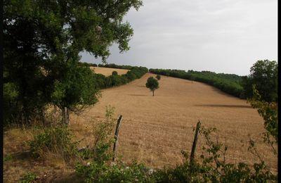 Chemins de Saint-Jacques - Du côté de Rocamadour