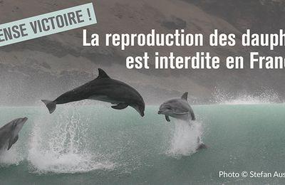 VICTOIRE! LA REPRODUCTION DES DAUPHINS INTERDITE EN FRANCE