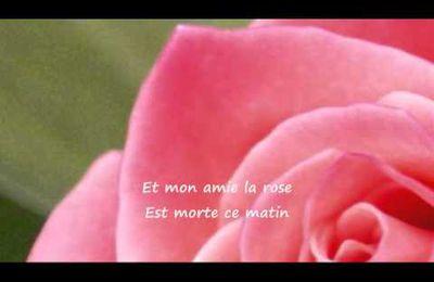 Mon Amie la Rose....