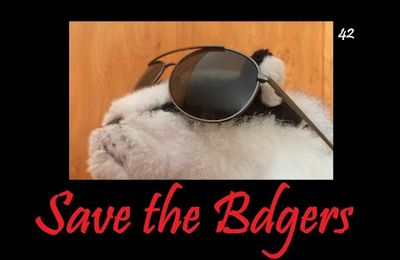 Save the Badger!