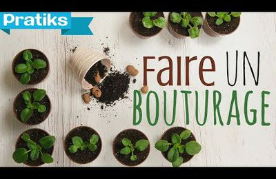 Comment faire un bouturage ?