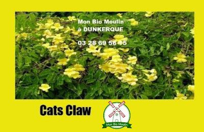 Griffe du Chat, Cat's claw à Dunkerque