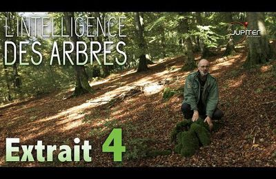 L'Intelligence des Arbres..