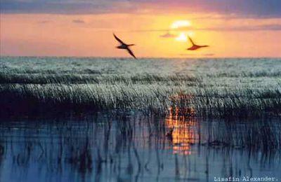 Volent les canards ~ Chanson populaire ~ Летят утки