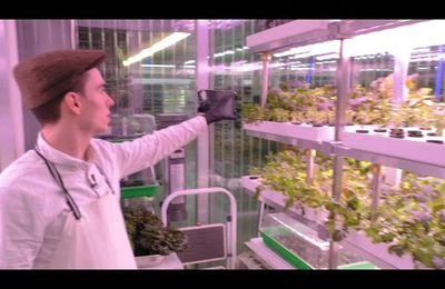 Trend Vertical Farming in Berlin