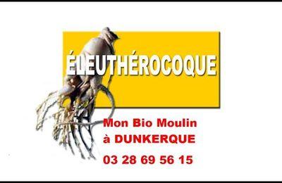 Eleuthérocoque à Dunkerque -  Mon Bio Moulin à Dunkerque
