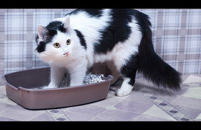 Hidden Solutions to Cat Not Using Litter Box Revealed