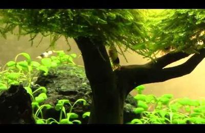 Video Aquascaping Terza Parte