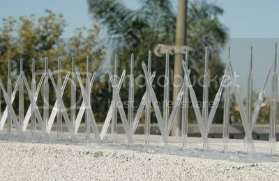 Why You Need Plastic Bird Spikes for Your Commercial Building