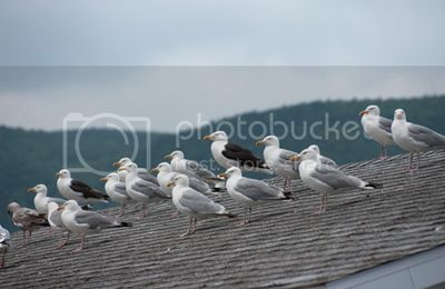 Top 3 Bird Control Devices for Rooftop Nightclubs