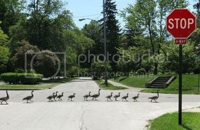 Deterring Pest Birds like Geese from Commercial Property