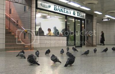 Sonic Bird Control Solves Subway Station Pigeon Problem