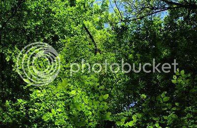 En forêt (3) La promenade continue