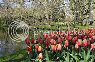 Printemps aux Pays Bas. Jardin de fleurs à Lisse : Keukenhof