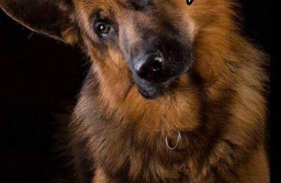Les blablas de la Présidente de LSF/ Bye bye mon chien...