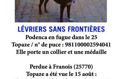 Avis de recherche /Podenca en fugue dans le Doubs ( 25) aux alentours de Franois(25770) / LSF