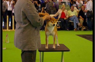 World Dog Show Paris 2011résultats shiba inu