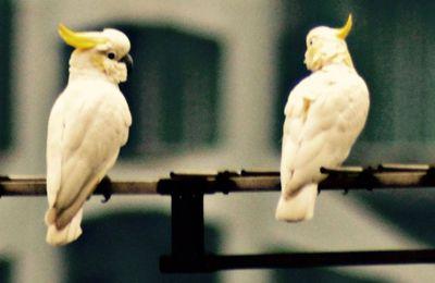 HONG KONG - Un nouveau départ pour des espèces menacées