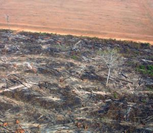 Deforestation in Brazil 3