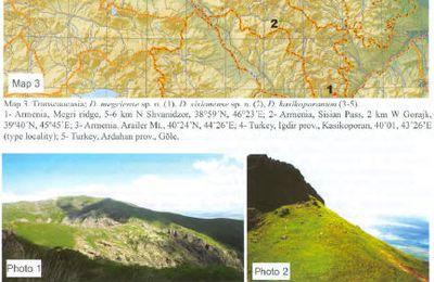 Dorcadion Asia oriental y central