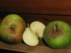 Gelée de pomme aux épices