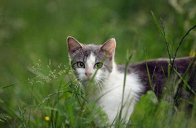 ROUMANIE: pas de nouveau cas H5N1 mais attente de résultats concernant un chat.