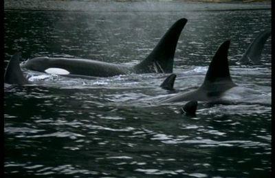 photos orques libres