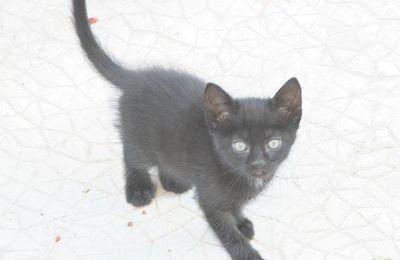 Chatons /Gatinhos / kitten