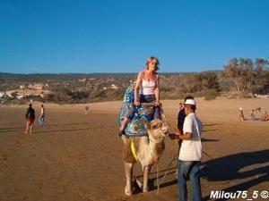 MILOU EN AFRIQUE...